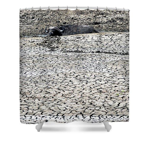Cape Buffalo Lying In Mud Shower Curtain