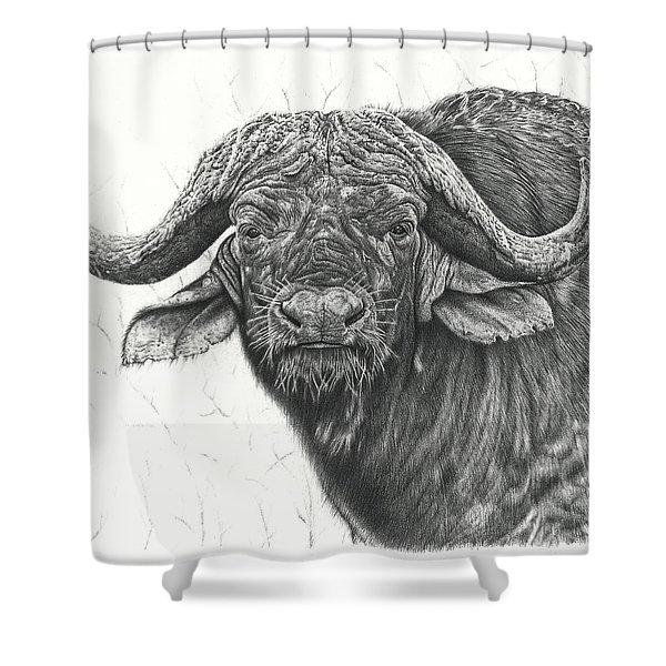 Cape Buffalo Shower Curtain
