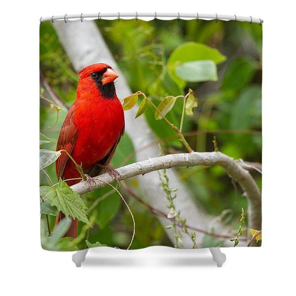 Cardinal 147 Shower Curtain
