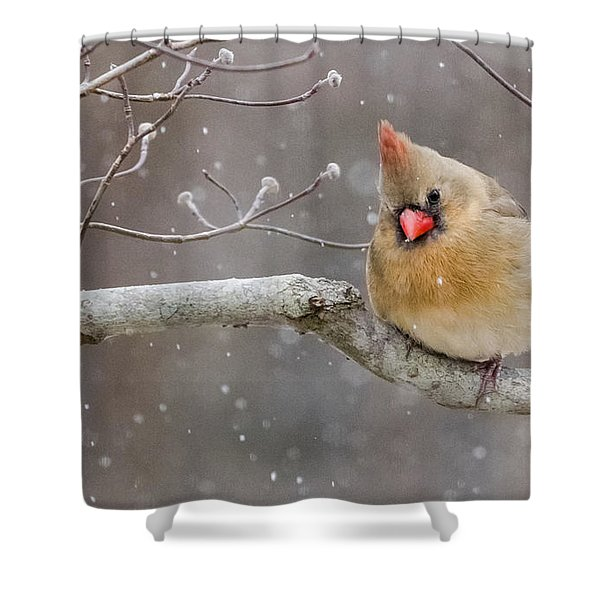 Cardinal And Falling Snow Shower Curtain