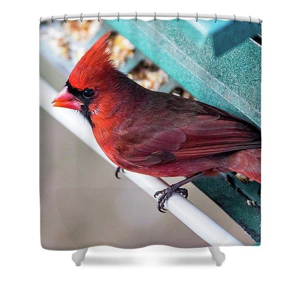 Cardinal Close Up Shower Curtain