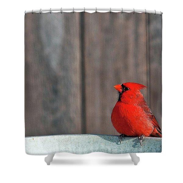 Cardinal Drinking Shower Curtain