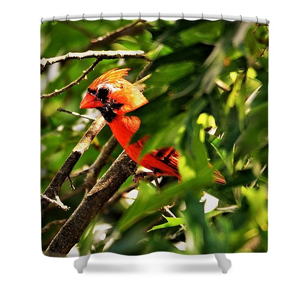 Cardinal In Tree Shower Curtain