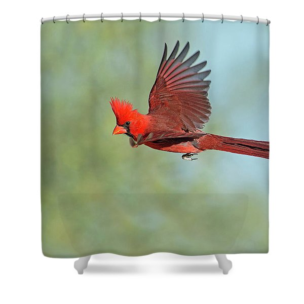 Cardinal On A Mission Shower Curtain