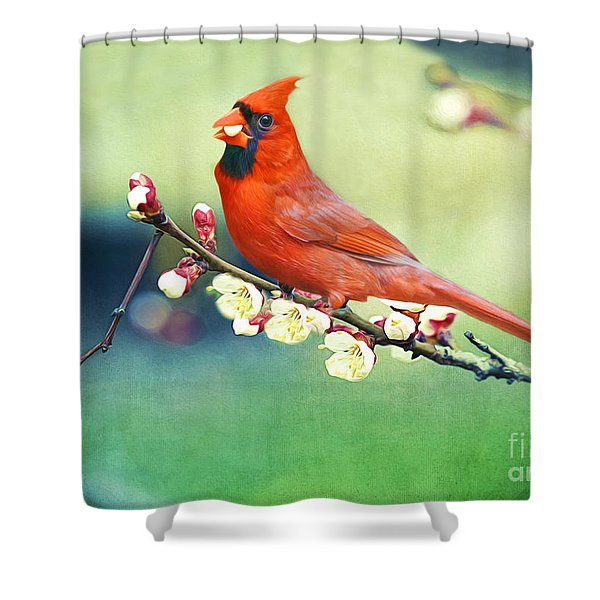 Cardinal On Apricot Branch Shower Curtain