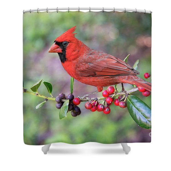 Cardinal On Holly Branch Shower Curtain