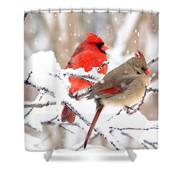 Cardinals In The Winter Shower Curtain