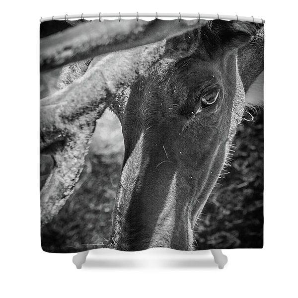Caribou Black And White Shower Curtain