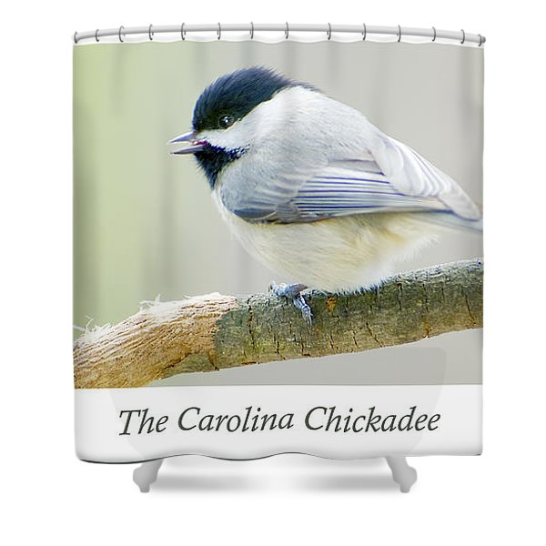 Carolina Chickadee, Animal Portrait Shower Curtain