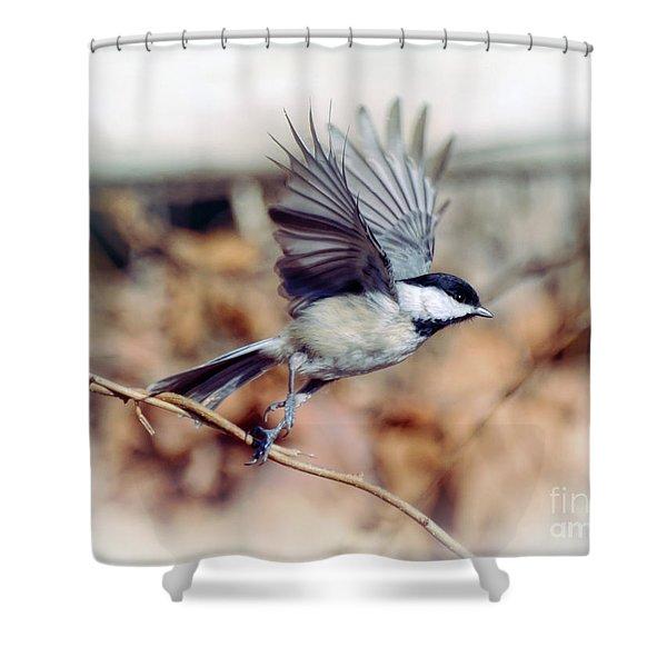 Carolina Chickadee - Come Fly With Me  Shower Curtain
