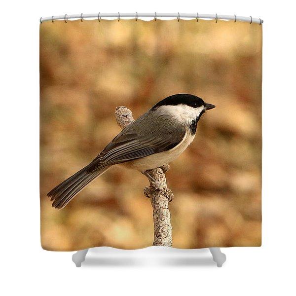 Carolina Chickadee On Branch Shower Curtain