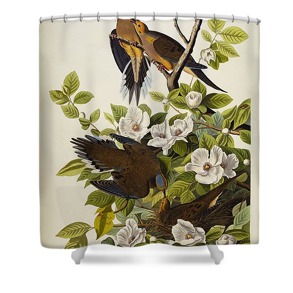 Carolina Turtledove Shower Curtain