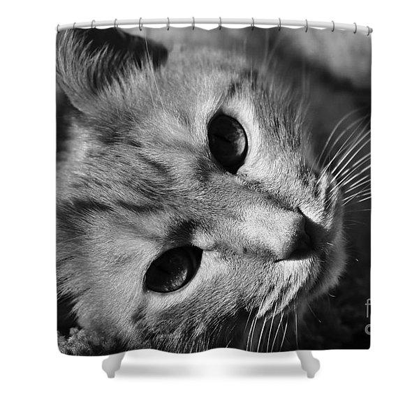 Cat Naps Shower Curtain