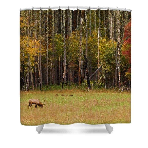 Cataloochee Valley Elk Shower Curtain
