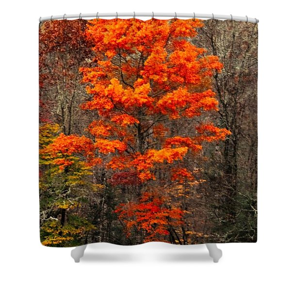 Cataloochee Color Shower Curtain