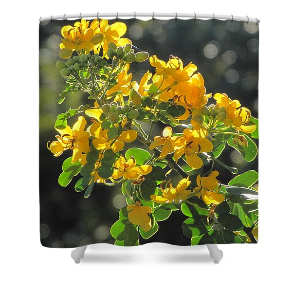 Catchlight Bee Over Yellow Blooms Shower Curtain