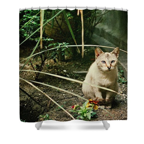 Cats Are Amazing Ll  Shower Curtain