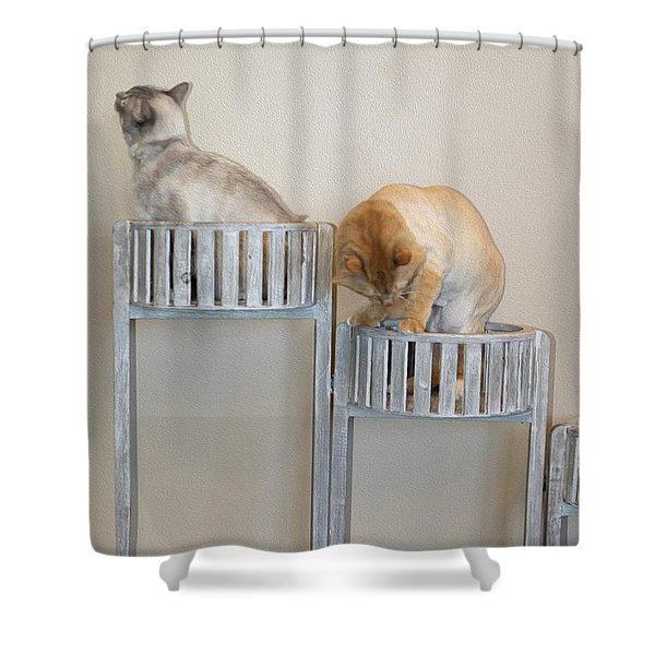 Cats In Baskets Shower Curtain