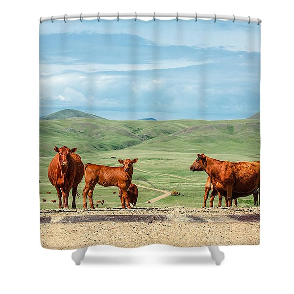 Cattle Guards Shower Curtain