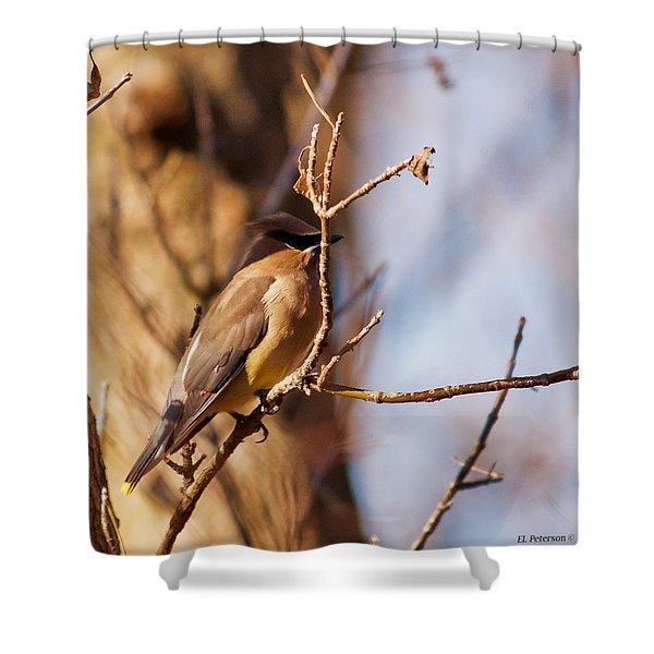 Cedar Waxwing In Autumn Shower Curtain