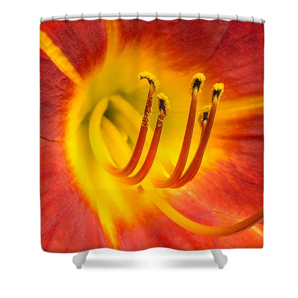 Center Of A Lily Shower Curtain