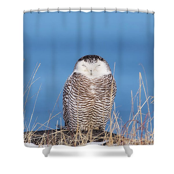 Centered Snowy Owl Shower Curtain
