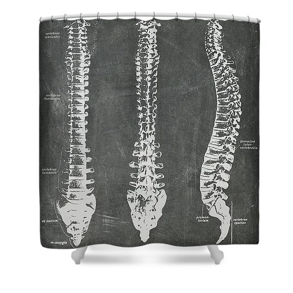 Chalkboard Anatomical Spines Shower Curtain