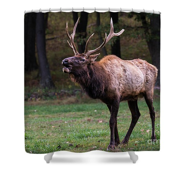 Shower Curtain featuring the photograph Challenger by Andrea Silies
