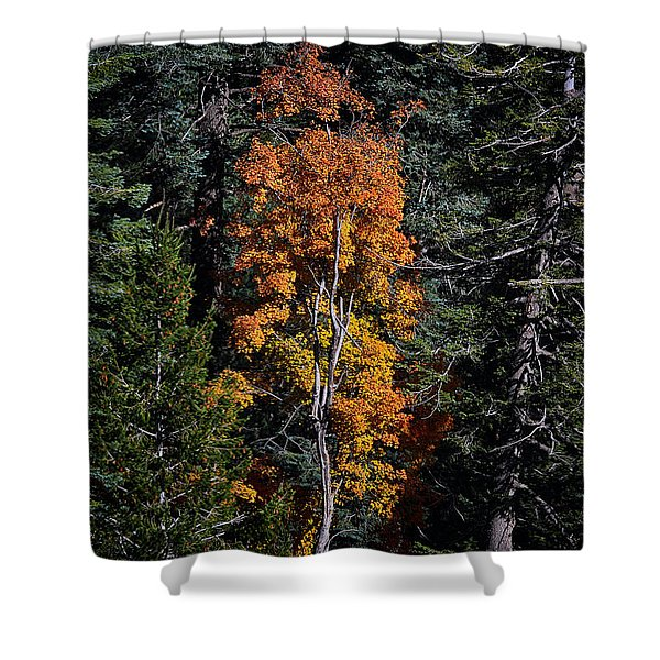 Change Of Seasons Shower Curtain