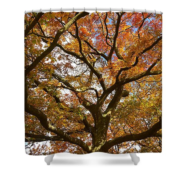 Changing Of The Oak Shower Curtain