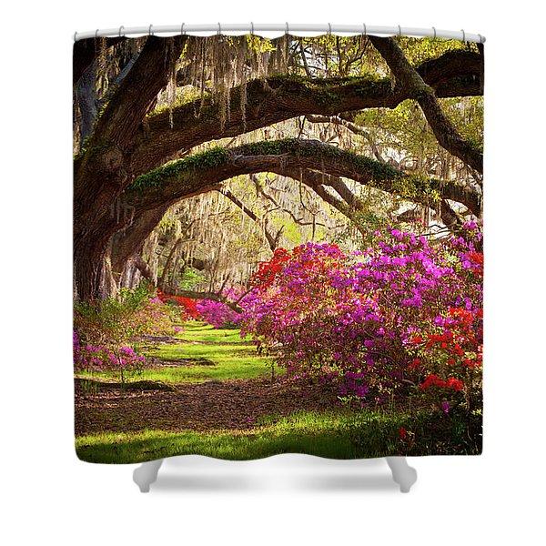 Charleston Sc Magnolia Plantation Gardens - Memory Lane Shower Curtain