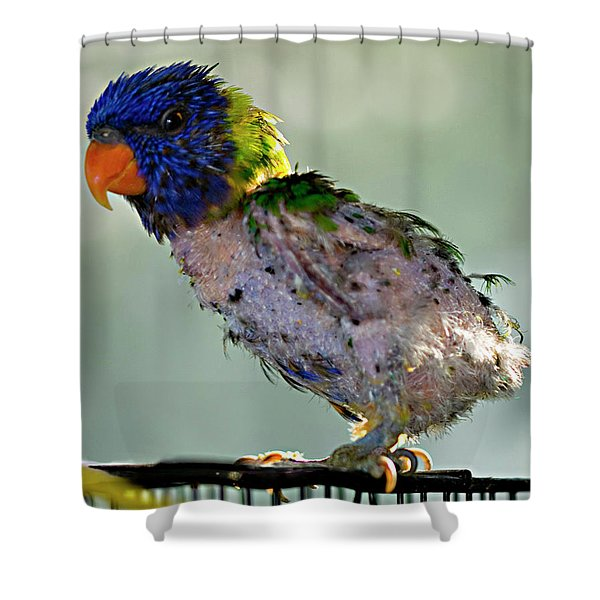 Charlie After A Night Out Shower Curtain