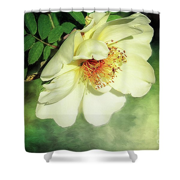 Charming Shower Curtain