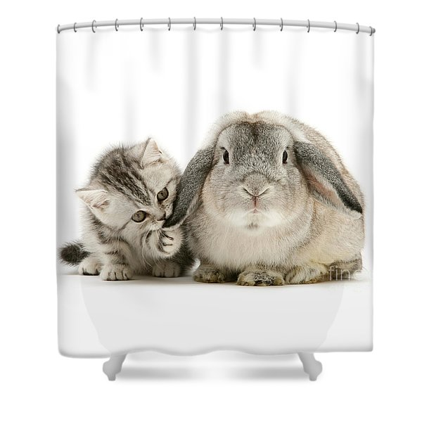 Checking For Grey Hares Shower Curtain
