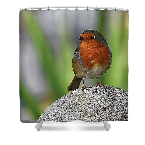 Cheeky Chappy Shower Curtain