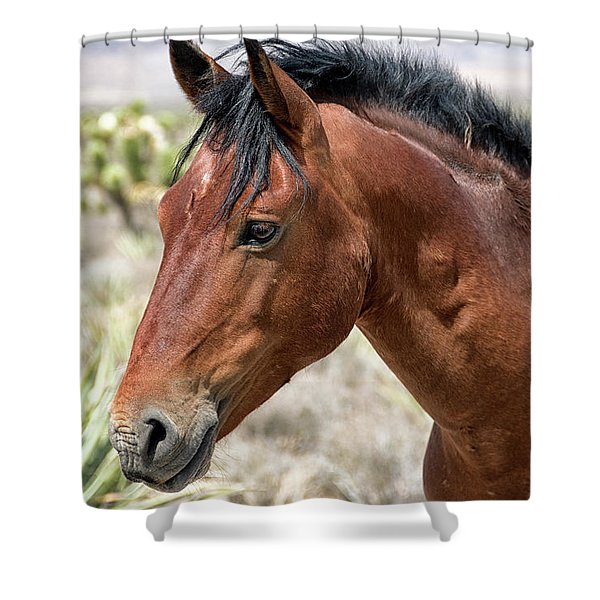 Cheers Where Everybody Knows Your Name Shower Curtain