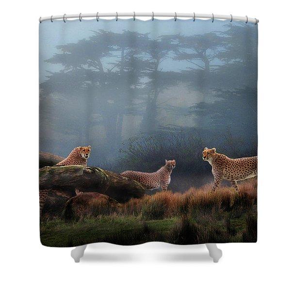 Cheetahs In The Mist Shower Curtain