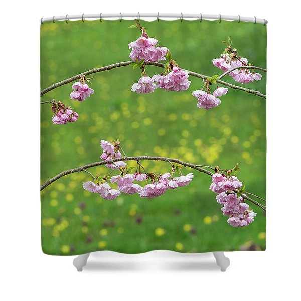 Cherry Accolade Blossom Shower Curtain