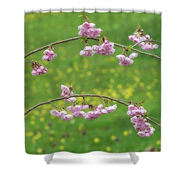 Cherry Accolade Blossom Shower Curtain