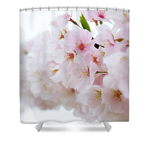 Cherry Blossom Focus Shower Curtain