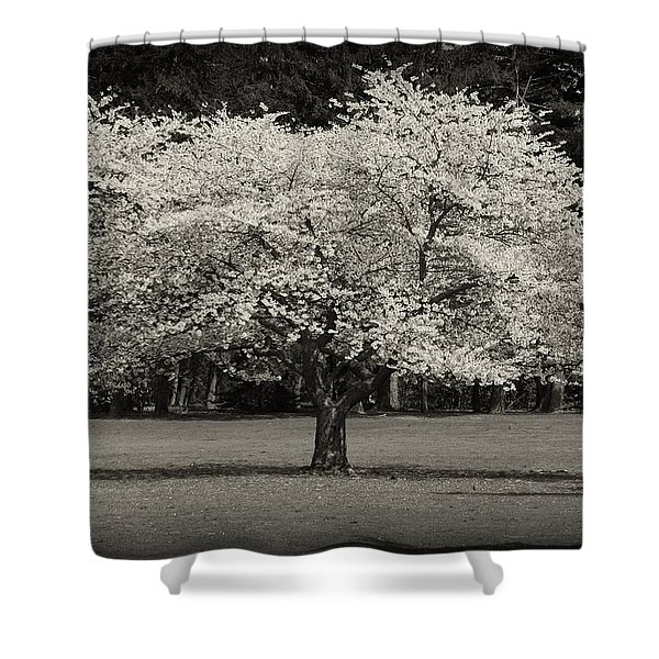 Cherry Blossom Tree - Ocean County Park Shower Curtain