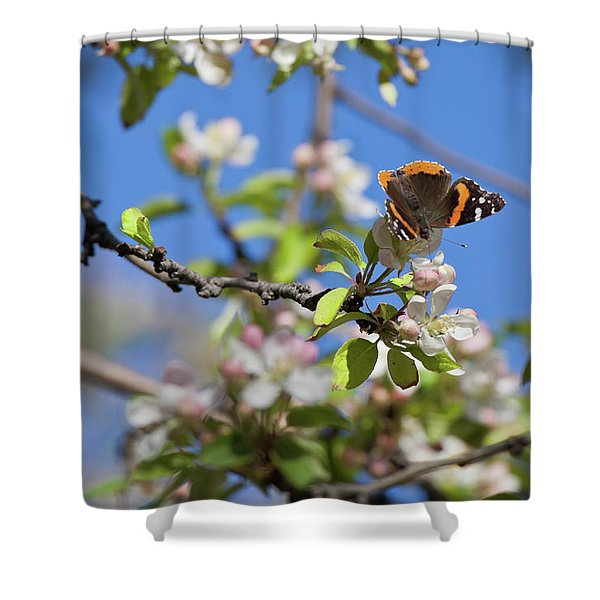 Monarch Butterfly On Cherry Tree Shower Curtain