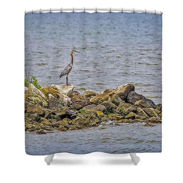 Chesapeake Bay Great Blue Heron Shower Curtain
