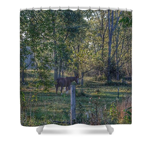 1009 - Chestnut Horse Among The Trees Shower Curtain