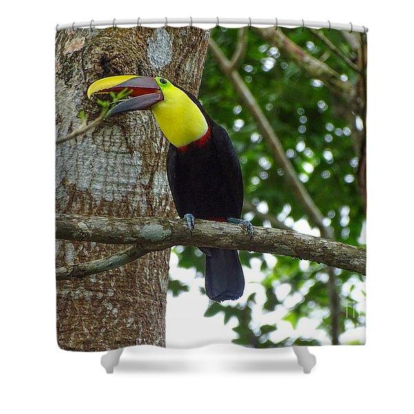 Chestnut-mandibled Toucan Shower Curtain