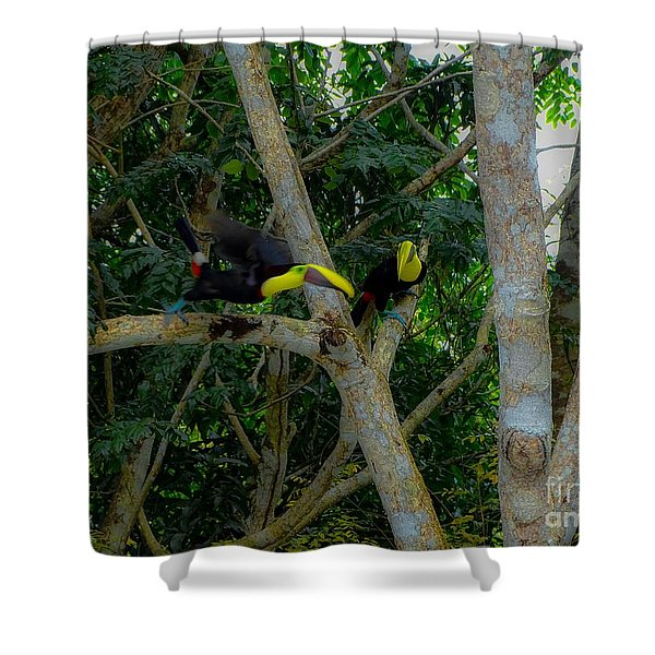 Chestnut-mandibled Toucans Shower Curtain