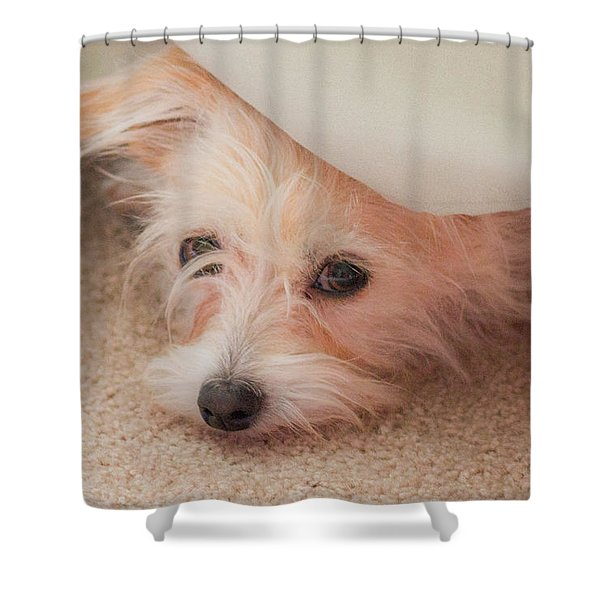 Chica In Hiding Shower Curtain