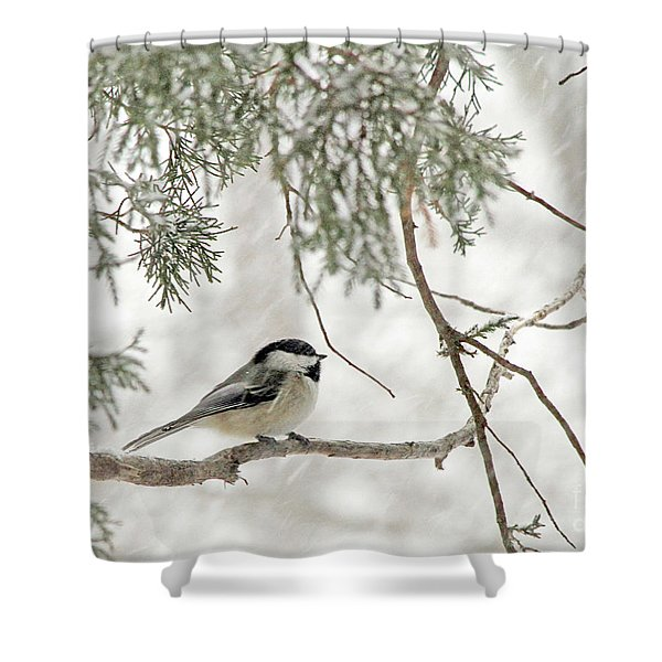Chicadee In A Snow Storm  Shower Curtain