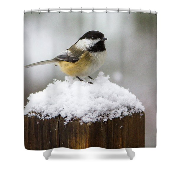 Chickadee In The Snow Shower Curtain