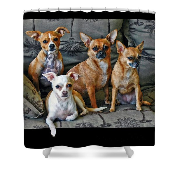 Chihuahuas Hanging Out Shower Curtain